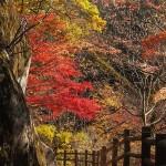 信州安曇野大峰高原の七色大カエデと北アルプスの紅葉の時期になりました。